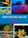 Ege - Türkiye'nin Deniz Canlıları