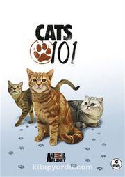 Kediler - Cats 101 (4DVD)