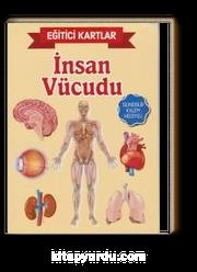 İnsan Vücudu / Eğitici Kartlar